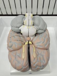 мозг 20170302
